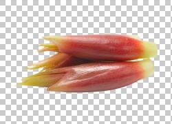 Myoga菜季节性食物膳食纤维Salsola komarovii,三野生竹笋PNG cli图片