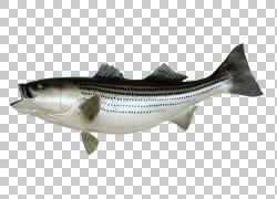 钓鱼鱼作为食物,鱼PNG剪贴画动物,桌面壁纸,多骨鱼,数码图像,鱼PN