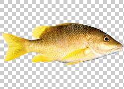 鱼作为食物,鱼PNG剪贴画海鲜,动物,动物群,桌面壁纸,数字图像,海