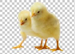 鸡肉鸡,肉鸡鸡鸡,两个黄色小鸡PNG剪贴画食物,鸡肉,鸡肉,鸡蛋,婴