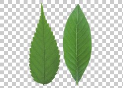 茶叶绿色,绿叶PNG剪贴画食物,叶,摄影,桌面壁纸,光,森林,pic,植物