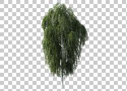 树桦木质植物,汽车后备箱PNG剪贴画摄影,风景,科,运输,地球,花园,