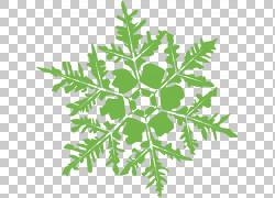 叶菜植物茎亚灌木,雪花PNG剪贴画叶蔬菜,叶,科,雪花,汽车,植物茎,