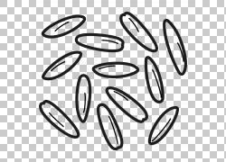 圆符号模式,燕麦PNG剪贴画白色,文本,燕麦,汽车,编号,材料,rim,汽
