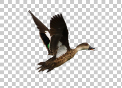 App Annie App Store Goose车载诊断,鹅PNG剪贴画动物,动物,野生