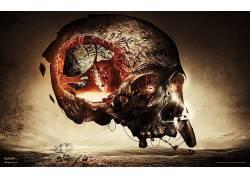 头骨,抽象,华美,艺术品,数字艺术2467