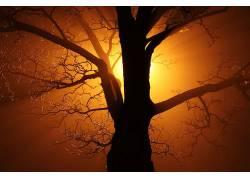 抽象,黑色,科,亮,黑暗,薄雾,金,灯火,性质,晚,旧,橙子,轮廓,树木,图片
