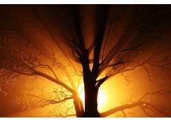 抽象,黑色,科,亮,黑暗,薄雾,金,灯火,性质,晚,旧,橙子,轮廓,树木,