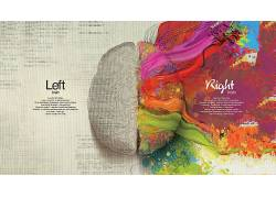 抽象,脑,科学,艺术品,解剖学,数字艺术,文本,引用,创造力,活版印