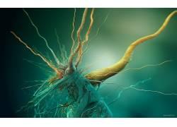 抽象,脑,细胞,生物学,数字艺术,给予18963