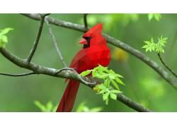 鸟类,红雀,抽象,几何322360图片