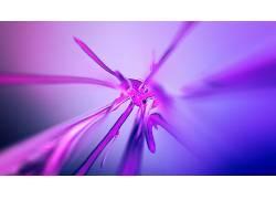 数字艺术,紫色,抽象,艺术品,液体225959