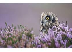 bird鸟,性质,动物,猫头鹰,鸟类,花卉,景深349498