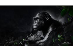 Desktopography,动物,雨,类人猿,数字艺术,猴87941