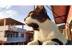猫,厄瓜多尔,动物,黄眼睛537440