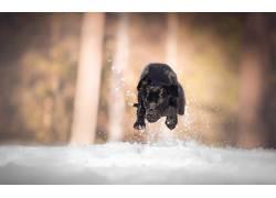 黑色,狗,雪,冬季,动物567501