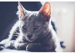 猫,哺乳动物,动物592384