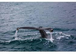摄影,鲸,海,性质,动物503814