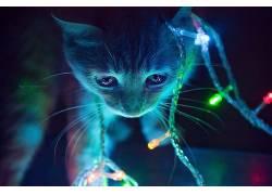 猫,圣诞,动物674037