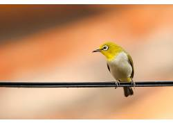 摄影,鸟类,动物449870