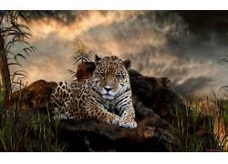 动物,豹(动物)378999