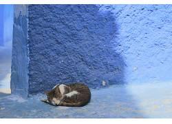 猫,壁,动物,睡眠687467