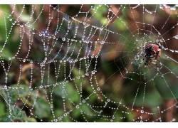 蜘蛛,动物387219