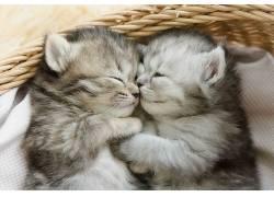小猫,动物,猫,睡眠673773