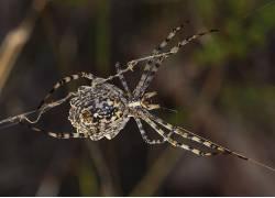 蜘蛛,动物387220