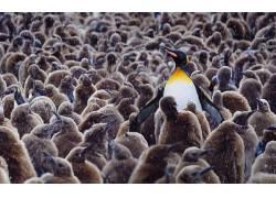 动物,野生动物,企鹅,小动物497383