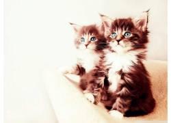 猫,小猫,动物392481