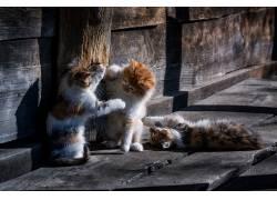 猫,小猫,动物646922