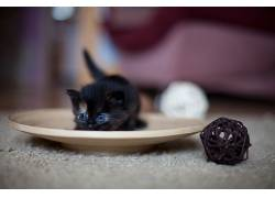 小猫,动物,猫662035