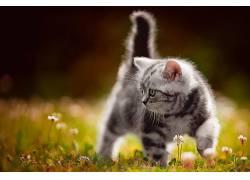 猫,小猫,动物674137