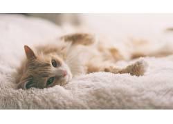 小猫,猫,动物,在床上,看着观众,模糊,特写637006