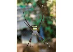 蜘蛛,动物387224