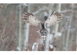 动物,野生动物,鸟类,猫头鹰497380