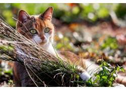 猫,性质,动物588974