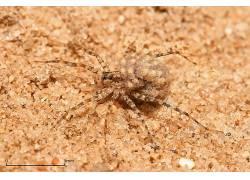 蜘蛛,动物387227