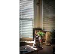 室内,房间,植物,猫,坐在,表,动物,500px的,Sebastiaan de With533