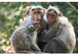 家庭,类人猿,小动物,动物558076