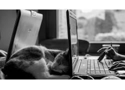 摄影,动物,猫371893