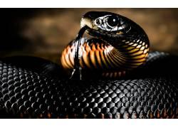 动物,蛇,爬行动物,曼巴377350