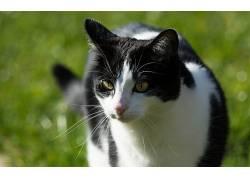 摄影,动物,猫371894