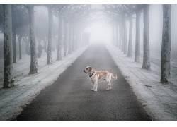 狗,动物,树木,冬季,雪608454