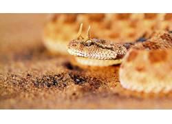 动物,蛇,爬行动物,砂439373