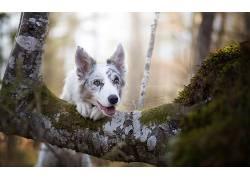 狗,动物,树木,性质530946