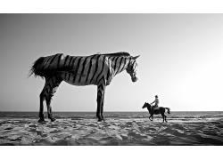 摄影,单色,照片处理,巨人,超现实主义,马,男人,动物,斑马,砂,沙漠