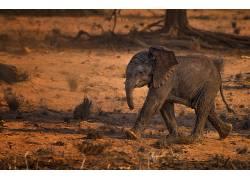 小动物,动物,象549730