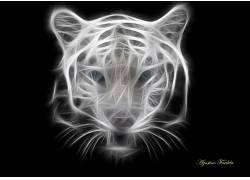 虎,野生动物599331